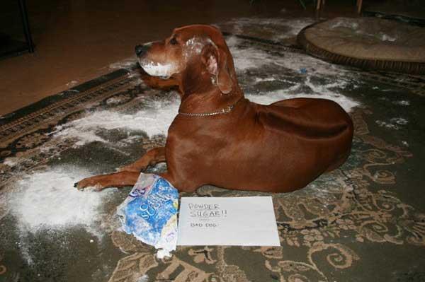 Perros-verguenza-foto-9