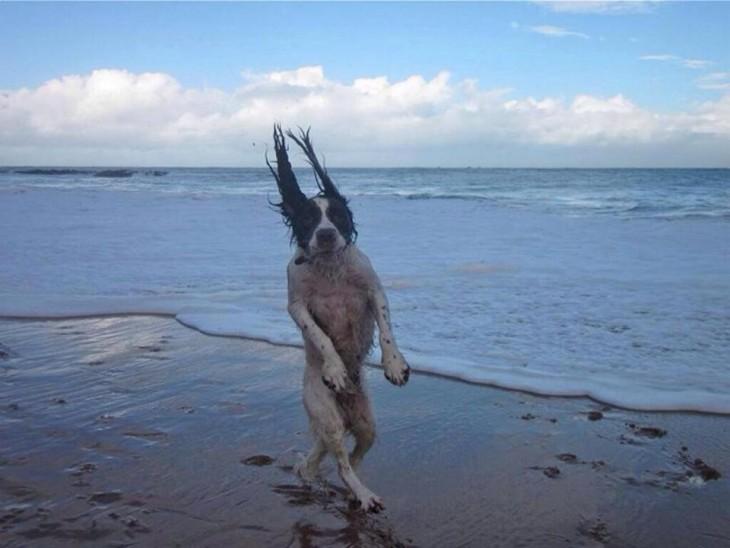 Humor: 30 fotos de Perros que simplemente NO tienen explicac