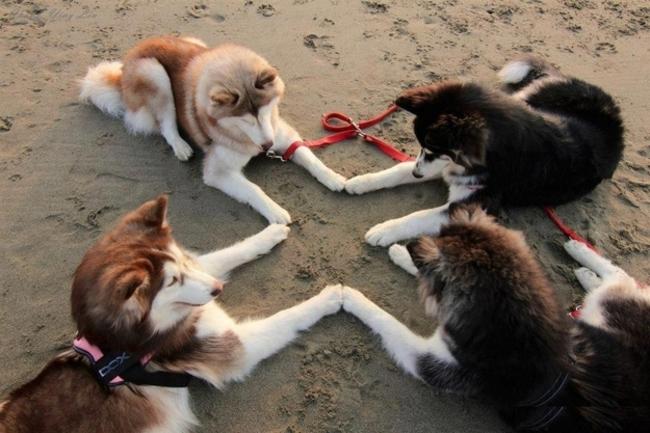 Situaciones-raras-de-perros-16