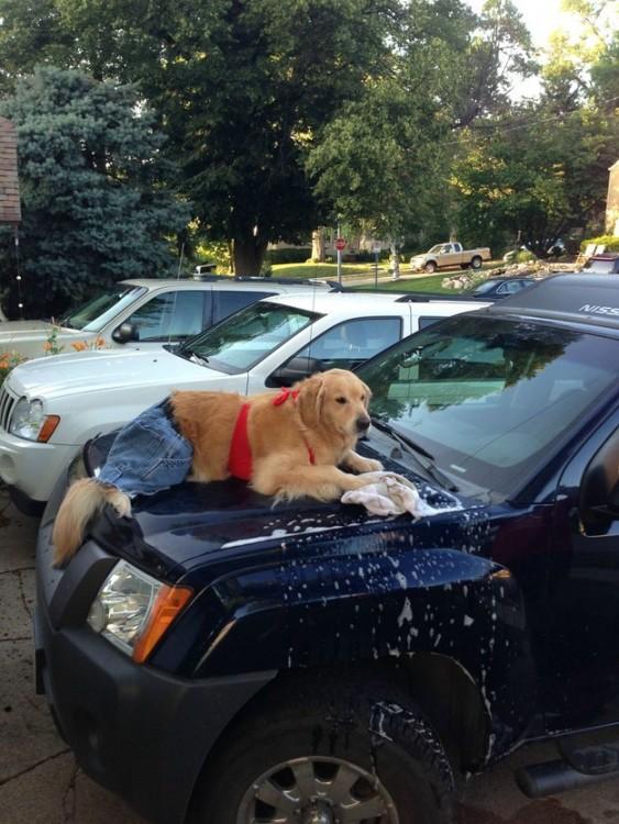 Situaciones-raras-de-perros-23-563x750