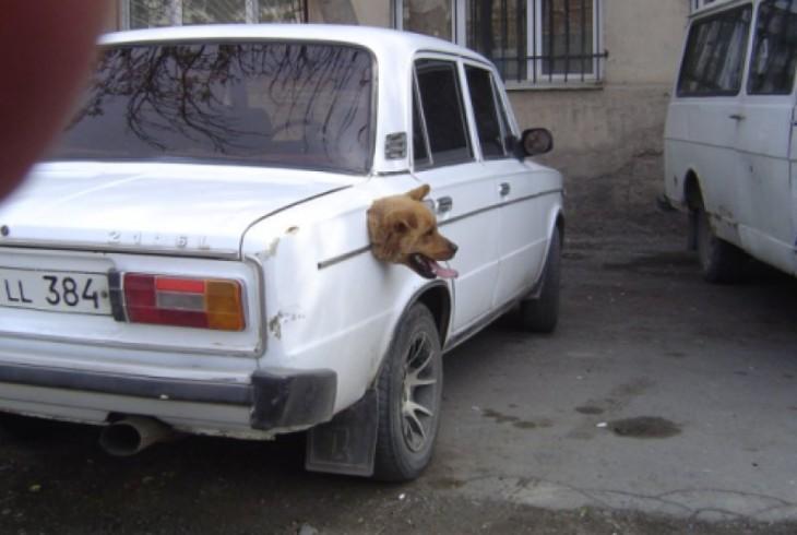 Situaciones-raras-de-perros-4-730x490