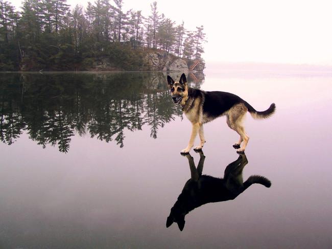 Situaciones-raras-de-perros-7