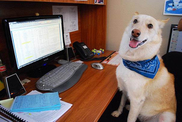bring-puppy-to-work-11__605