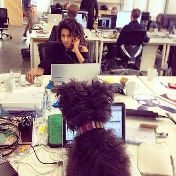 bring-puppy-to-work-12__605