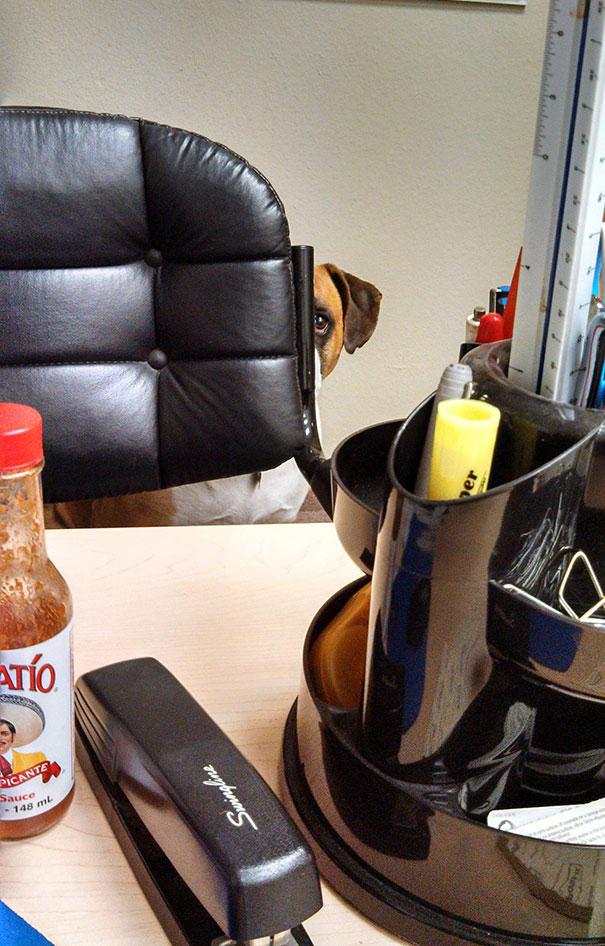bring-puppy-to-work-18__605