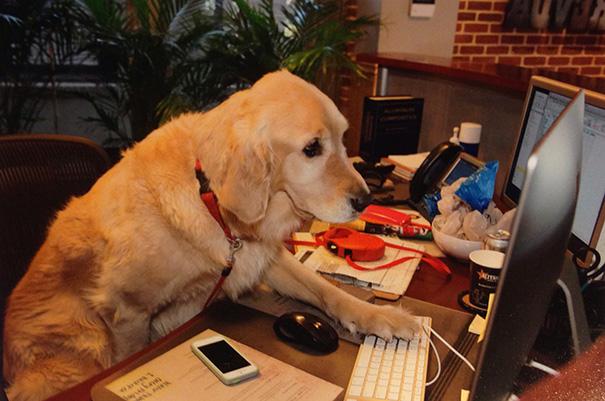 bring-puppy-to-work-19__605