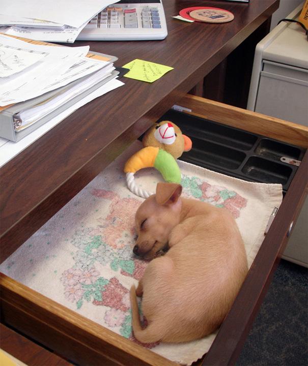 bring-puppy-to-work-43__605