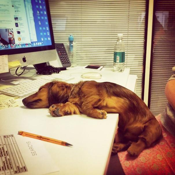 bring-puppy-to-work-44__605