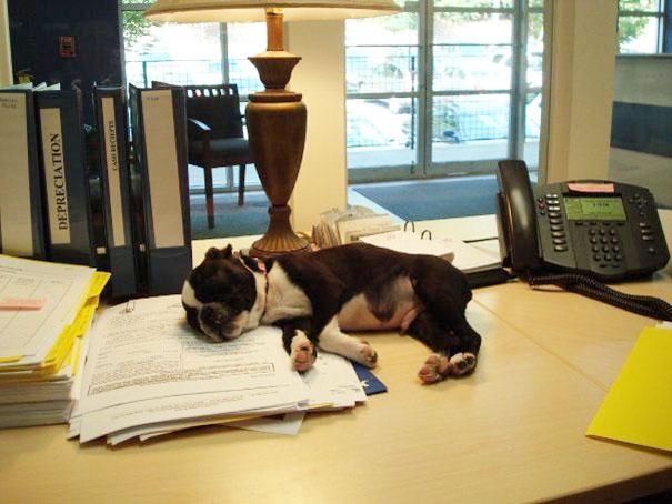 bring-puppy-to-work-7__605