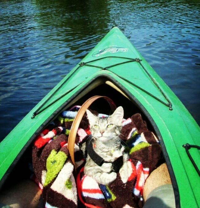 kayak-gato-reddit-com