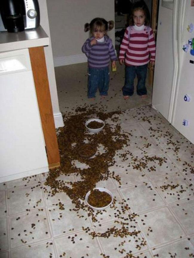 nenas-comida-de-perro