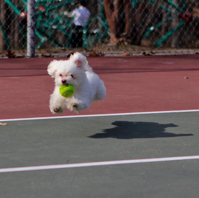 perro-tenis-redit-com
