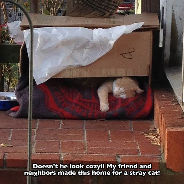pet_owners_who_really_treat_their_pets_like_family_640_35