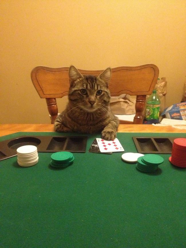 poker-gato-reddit-com