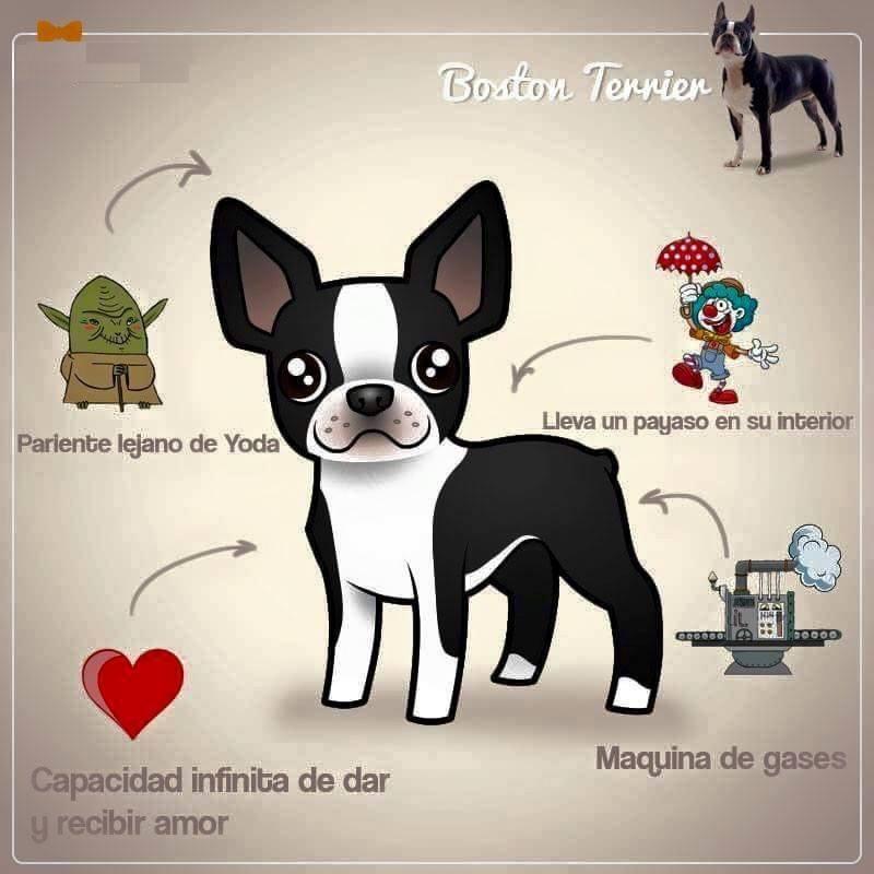 17 imágenes explican la personalidad de las razas de perros