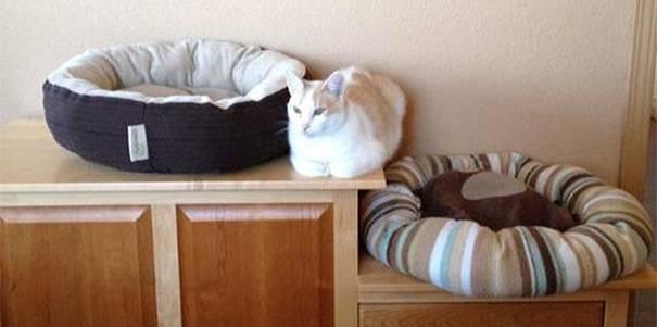25-fotos-de-lógica-de-los-gatos-1
