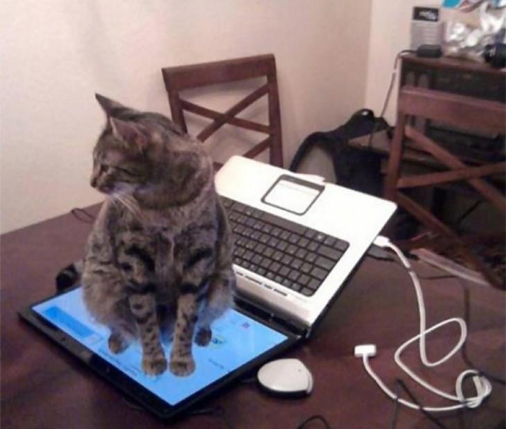 25-fotos-de-lógica-de-los-gatos-10-730x618
