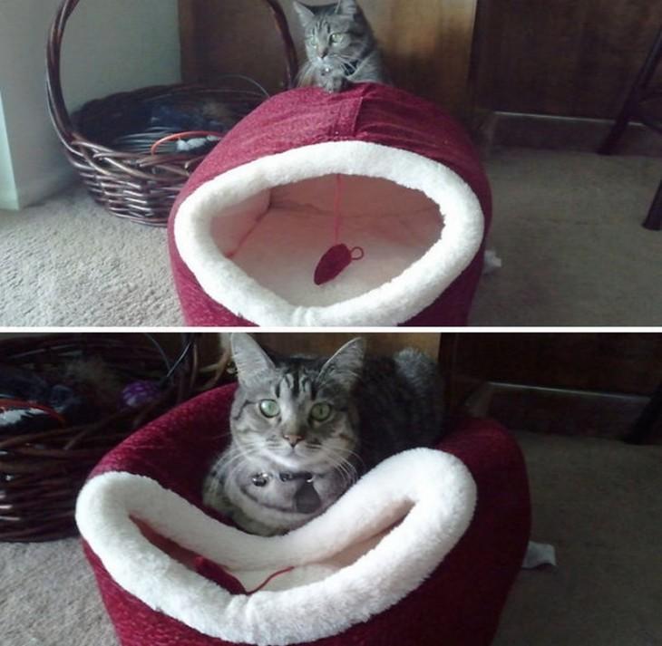 25-fotos-de-lógica-de-los-gatos-13-730x713