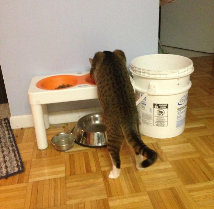 25-fotos-de-lógica-de-los-gatos-14