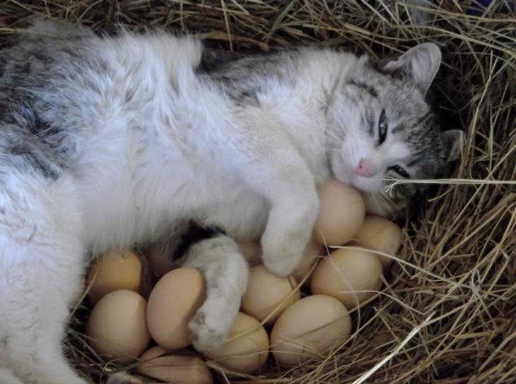 25-fotos-de-lógica-de-los-gatos-19-730x544