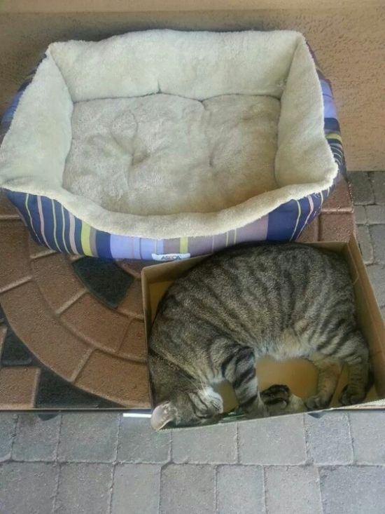 25-fotos-de-lógica-de-los-gatos-22