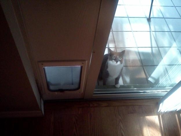 25-fotos-de-lógica-de-los-gatos-3