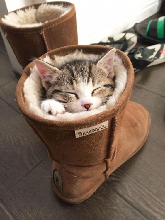 25-fotos-de-lógica-de-los-gatos-5-563x750