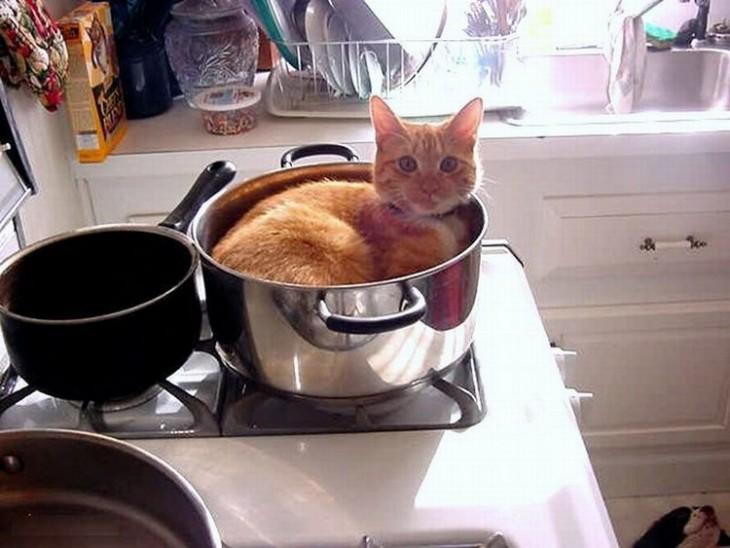 25-fotos-de-lógica-de-los-gatos-6-730x548