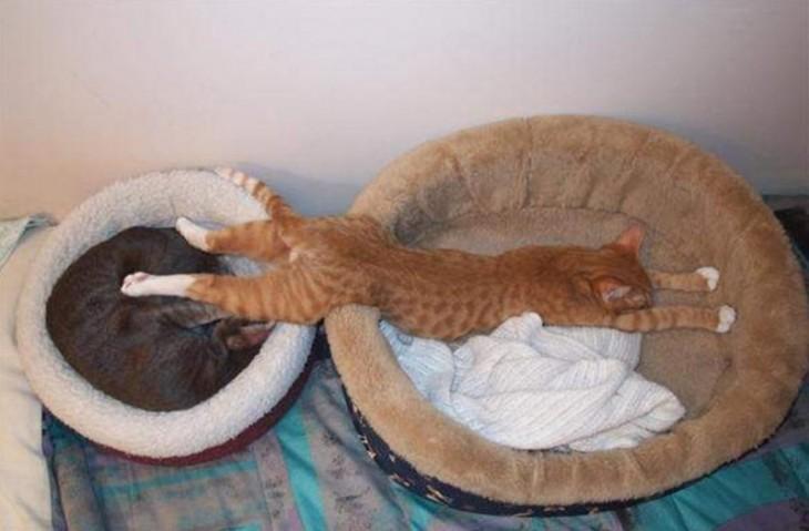 25-fotos-de-lógica-de-los-gatos-8-730x479