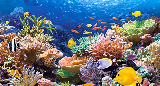 Coral+Reef+Fishes-680x365