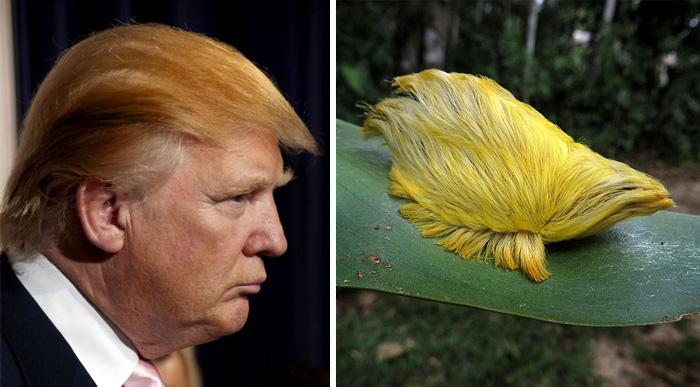 Cosas-y-objetos-que-se-parecen-a-Donald-Trump-1