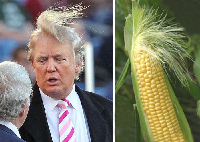 Cosas-y-objetos-que-se-parecen-a-Donald-Trump-11