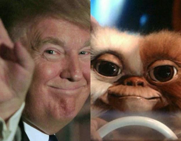 Cosas-y-objetos-que-se-parecen-a-Donald-Trump-15