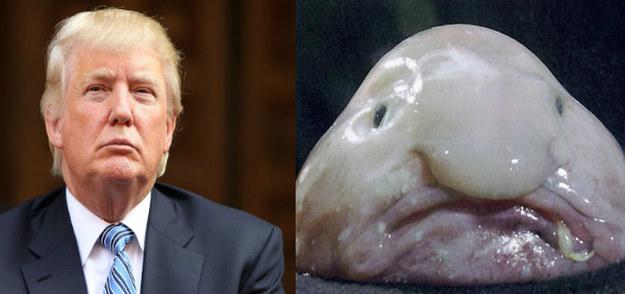 Cosas-y-objetos-que-se-parecen-a-Donald-Trump-16