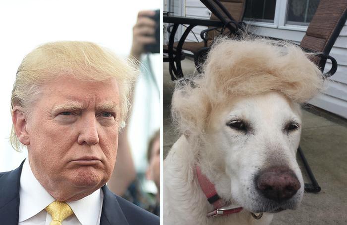 Cosas-y-objetos-que-se-parecen-a-Donald-Trump-2