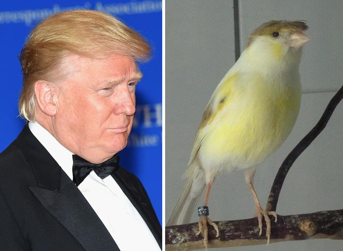 Cosas-y-objetos-que-se-parecen-a-Donald-Trump-3