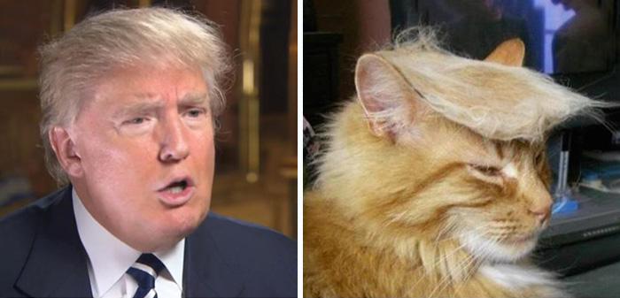 Cosas-y-objetos-que-se-parecen-a-Donald-Trump-4