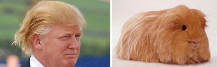 Cosas-y-objetos-que-se-parecen-a-Donald-Trump-7