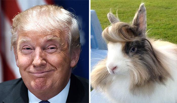 Cosas-y-objetos-que-se-parecen-a-Donald-Trump-9