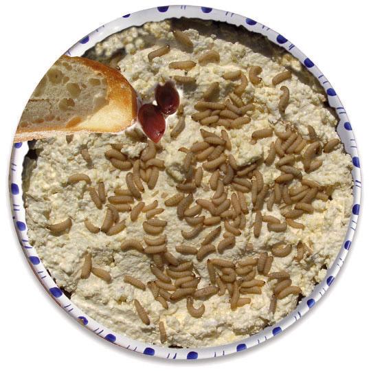 El-Casu-Marzu-es-literalmente-un-queso-de-gusanos.