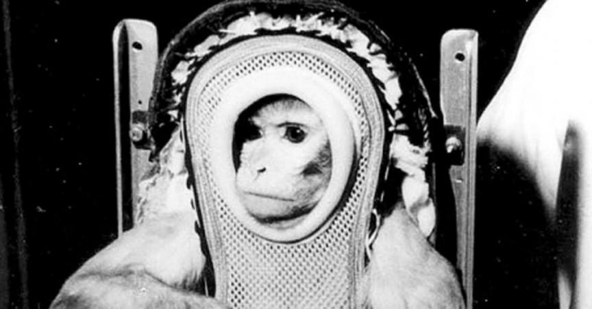 Una-foto-de-Sam-un-mono-astronauta-5-millones-de-dólares