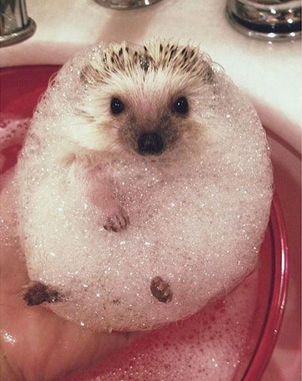 XX-animals-that-enjoys-taking-a-bath-2__605