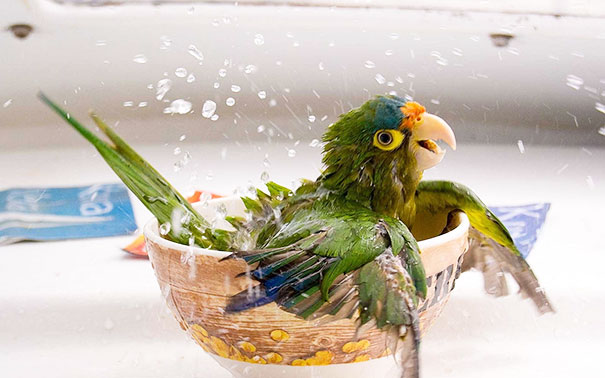 XX-animals-that-enjoys-taking-a-bath-6__605