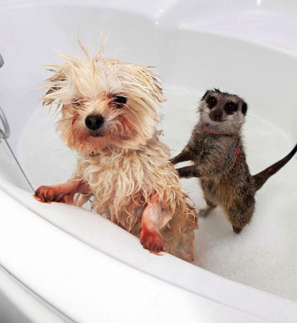 animals-taking-bath-14__605