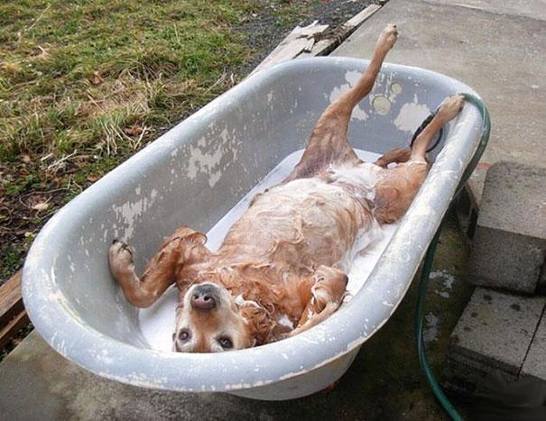 animals-taking-bath-17__605