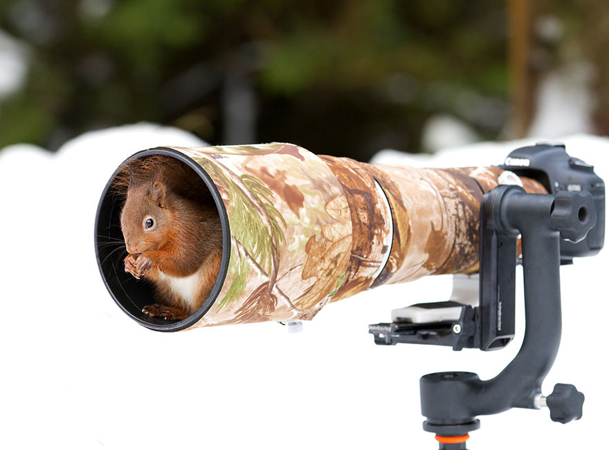 animals-with-camera-helping-photographers-11__880