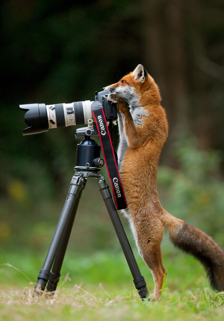 animals-with-camera-helping-photographers-13__880