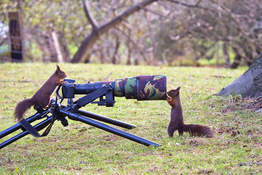 animals-with-camera-helping-photographers-14__880