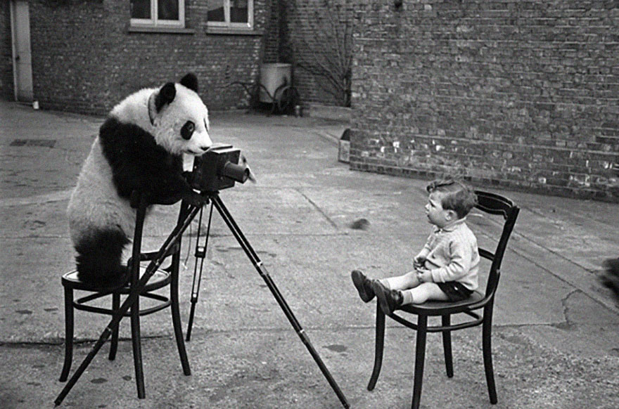 animals-with-camera-helping-photographers-15__880