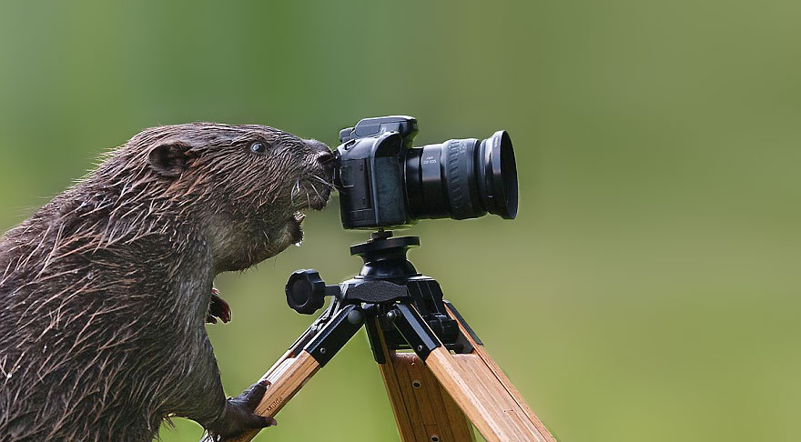 animals-with-camera-helping-photographers-17__880